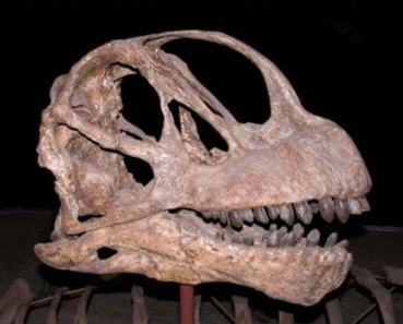 恐龙胚胎震惊世人!盘点全球独特的恐龙化石
