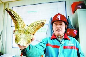 北京挖出260万年前岩羊化石 犄角粗似男子小臂