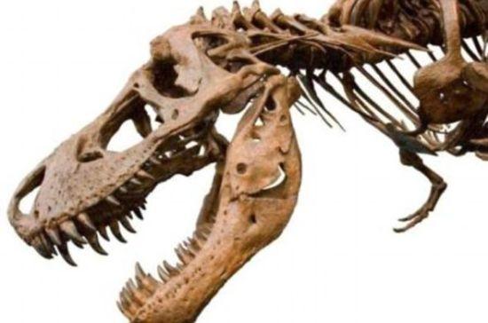 美国农田里发现6700万年前霸王龙化石