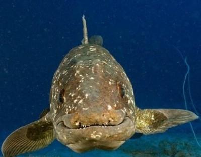 科学家发现2.5亿年前空棘鱼新种化石