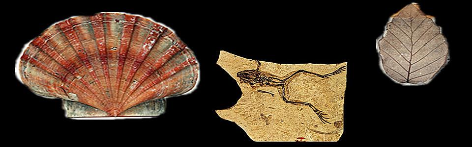 化石专题-华夏收藏网