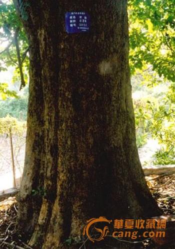 历史上与紫檀相混淆的木材