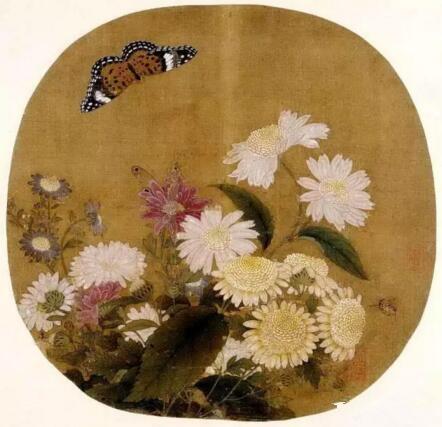 绝美的蝴蝶