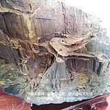 硅化木 树化石 树化玉景观原石   立体画廊