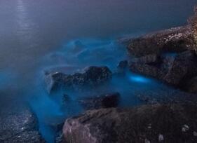 山东现荧光海滩 如同星辰坠入大海 宛如阿凡达世界