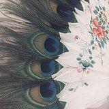 鹅毛孔雀毛彩绘扇