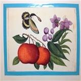 19世纪清代通草画-花鸟4